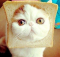 cat-bread