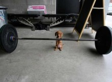 dog-lift