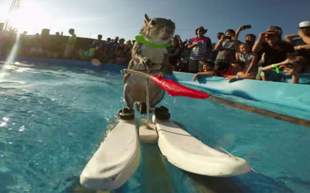 this squirrel can waterski better than me